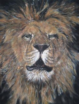 panthera leo - King of lions