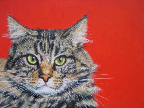 domestic cat - a cat in red
