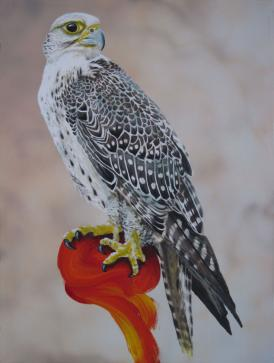 falco rusticolus - Gerfalke
