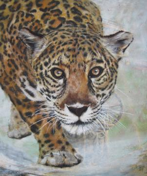 panthera onca -  what are you looking at